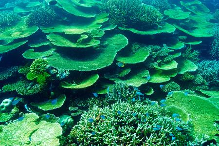 Coral reef at South Ari Atoll, Maldives Stock Photo - 26770647
