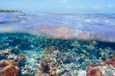 Coral reef at South Ari Atoll, Maldives Stock Photo - 28504159