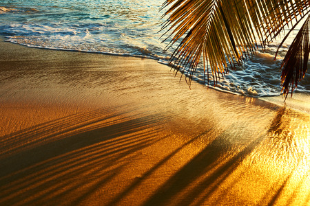 Beautiful sunset at Seychelles beach with palm tree shadow over sand photo