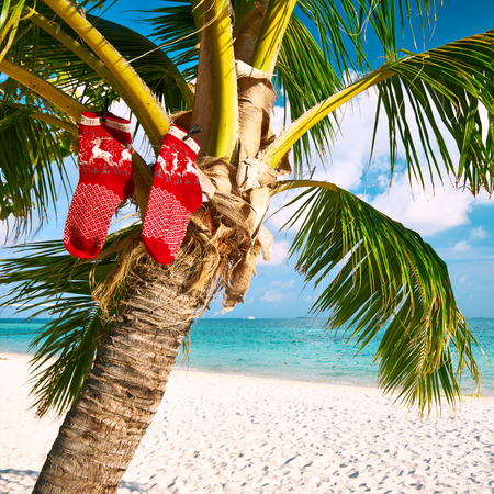 Beautiful beach with palm tree at christmas photo