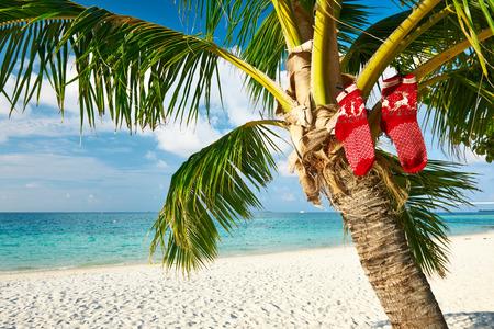 Beautiful beach with palm tree at christmas Stock Photo