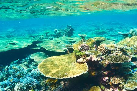 Coral reef at South Ari Atoll, Maldives photo