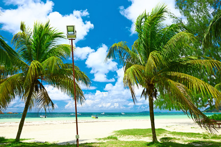 cote: Beautiful beach with palm tree at Seychelles, Praslin, Cote dOr