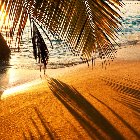 praslin: Beautiful sunset at Seychelles beach with palm tree shadow over sand