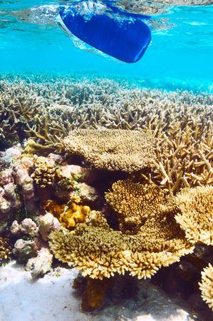ari: Coral reef and paddle at South Ari Atoll, Maldives
