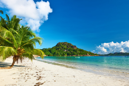 Beautiful beach with palm tree at Seychelles, Praslin, Cote dOr photo
