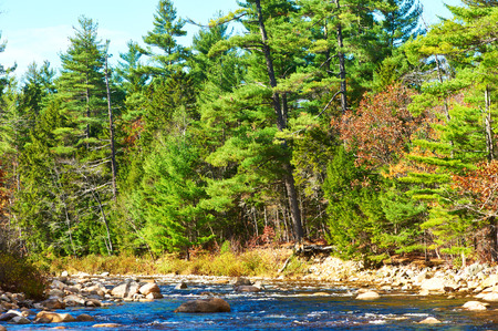 national forest: R�o r�pido en White Mountain National Forest, Nueva Hampshire, EE.UU..