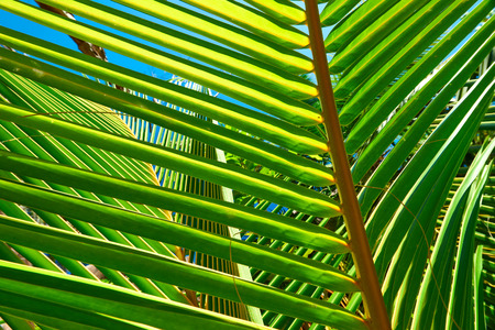 digue: Palm tree leaf on beach at Seychelles, La Digue