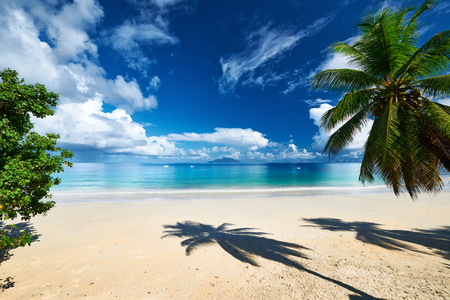 crystal clear: Beautiful beach with palm tree at Seychelles, Mahe Stock Photo