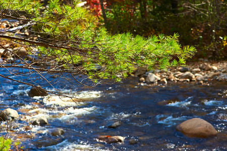 swift: Swift River in White Mountain National Forest, New Hampshire, USA. Stock Photo