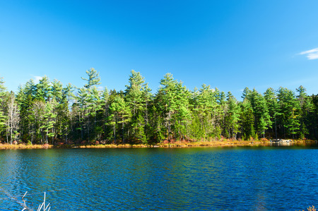 lake  pond  trees: Pond in White Mountain National Forest, New Hampshire, USA.