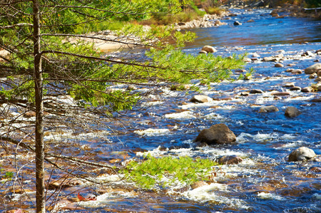 national forest: Swift River in White Mountain National Forest, New Hampshire, USA. Stock Photo