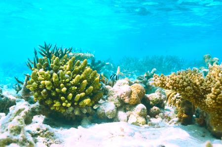 atoll: Coral reef at South Ari Atoll, Maldives Stock Photo