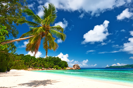 digue: Beautiful beach with palm tree at Seychelles, La Digue.