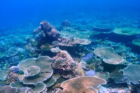 ari: Coral reef at South Ari Atoll, Maldives Stock Photo