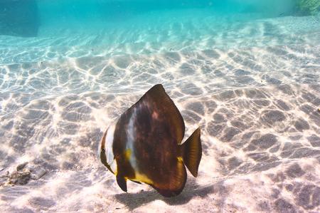 seychelles: Tropical reef fish at Seychelles Stock Photo