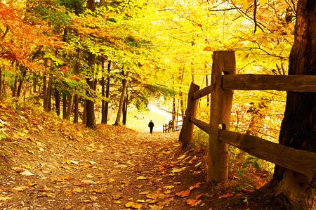 new york: Autumn scene landscape at Letchworth State Park Stock Photo