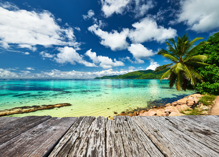 jetty: Beautiful beach and old wooden pier with palm tree at Seychelles, Mahe