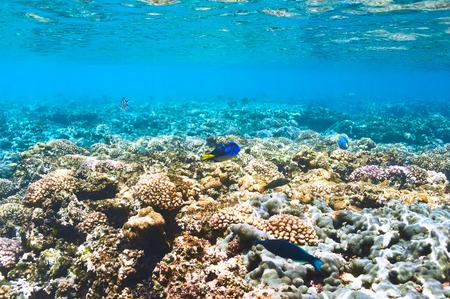 corales marinos: Los arrecifes de coral y peces en Seychelles