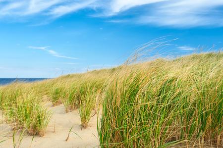 cape: Landscape with sand dunes at Cape Cod, Massachusetts, USA.
