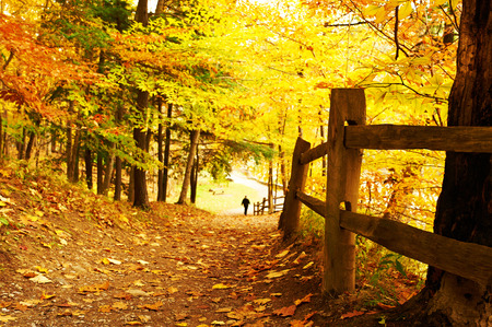 footpath: Autumn scene landscape at Letchworth State Park Stock Photo