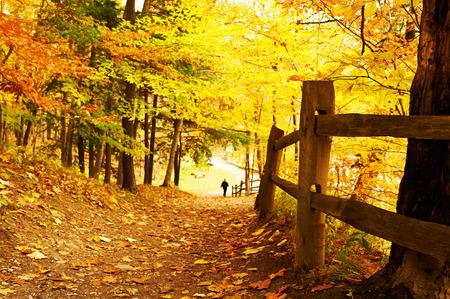 autumn landscape: Autumn scene landscape at Letchworth State Park Stock Photo