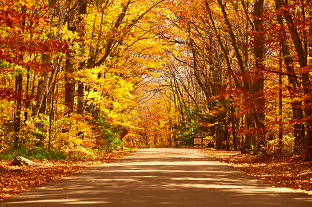 scenic drive: Autumn scene with road in forest