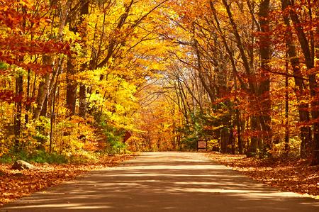 Scène van de herfst met weg in het bos