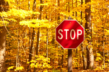 street signs: Autumn scene with road and stop sign in forest