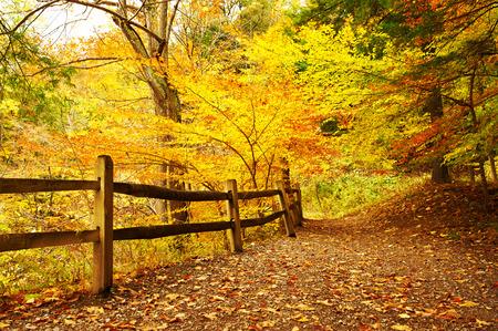autumn scene: Autumn scene landscape at Letchworth State Park Stock Photo