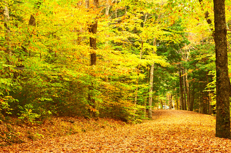 somewhere: Autumn scene landscape somewhere in New England
