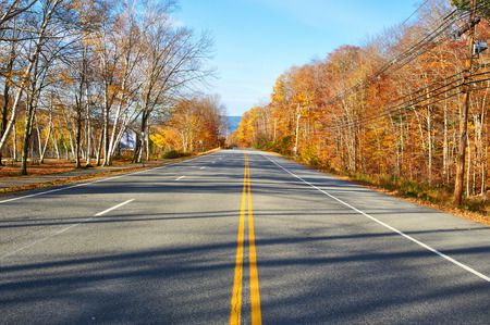 scenic highway: Autumn scene with road in forest