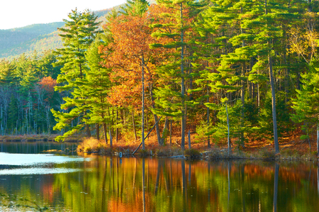 Pond in White Mountain National Forest, New Hampshire, USA. Stock Photo - 44725020