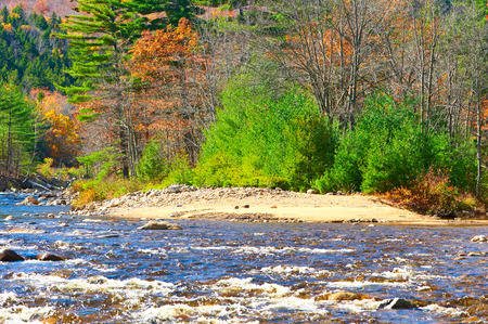 national forest: Swift River at autumn in White Mountain National Forest, New Hampshire, USA.