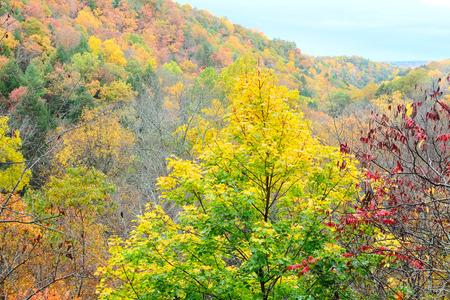 robert: Autumn scene landscape at Robert H. Treman State Park Stock Photo
