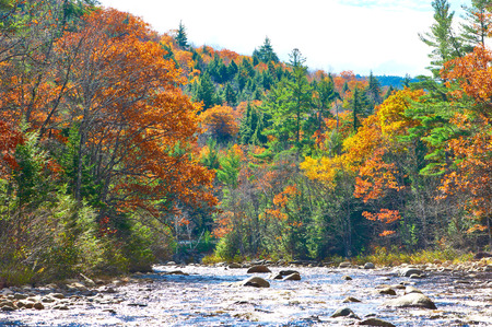 swift: Swift River at autumn in White Mountain National Forest, New Hampshire, USA.