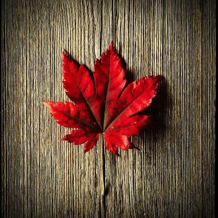 maples: Autumn maple leaf over old wooden background with copy space