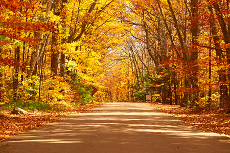 Autumn scene with road in forest Imagens - 45181739