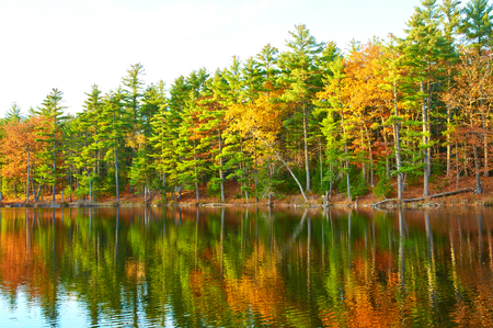 pine forest: Pond in White Mountain National Forest, New Hampshire, USA.