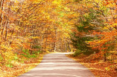 Autumn scene with road in forest Reklamní fotografie