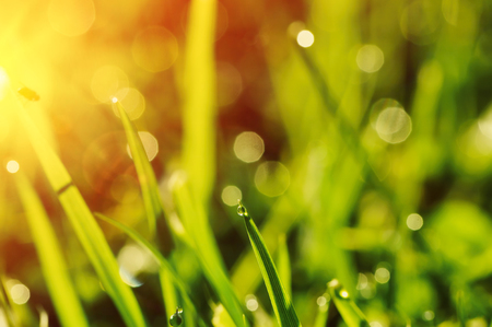 lush: Morning grass with dew drops Stock Photo