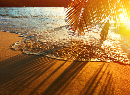 summer tree: Beautiful sunset at Seychelles beach with palm tree shadow over sand