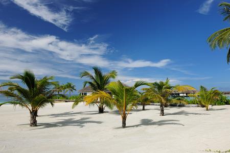 atoll: Beautiful beach at Maldives, South Male Atoll