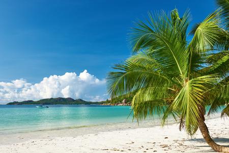 destination scenics: Beautiful beach with palm tree at Seychelles, Praslin, Cote dOr