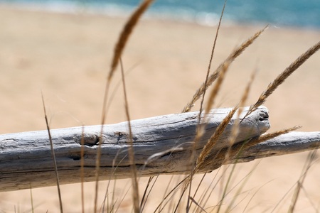 lake beach: Beach at Lake Huron, Michigan, USA Stock Photo