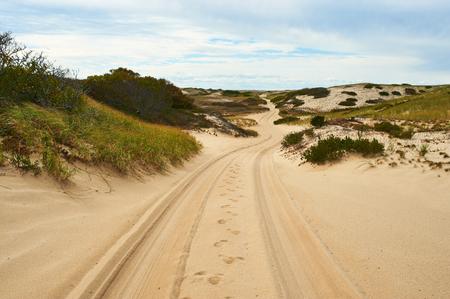 coastlines: Road in sand dunes at Cape Cod, Massachusetts, USA. Stock Photo