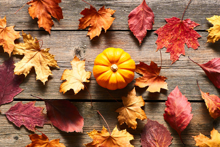 hojas antiguas: Autumn leaves and pumpkin over old wooden background