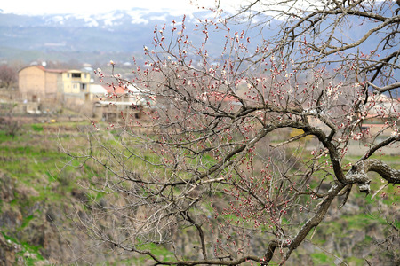 Early spring blossoms in Armenia Stock Photo