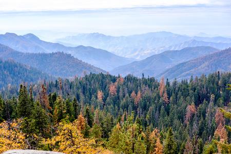 sequoia: Sequoia National Park mountain scenic landscape at autumn. California, United States.