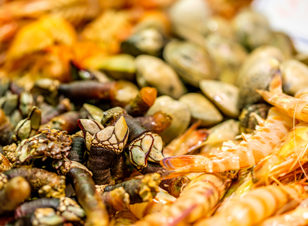 Fresh langoustines, barnacles and other shells at seafood market
